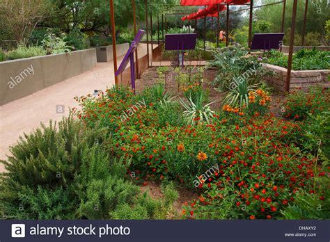 botanical gardens arizona desert botanical garden arizona stock photo