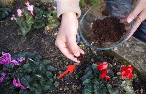 koffiedik tuin 7 redenen waarom je vanaf nu koffiedik in de tuin moet