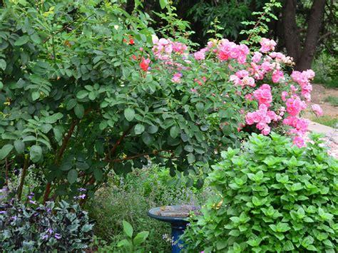 Denver Botanic Gardens Membership Denver Botanic Gardens Membership Denver Botanic Gardens Membership Garden Ftempo Denver
