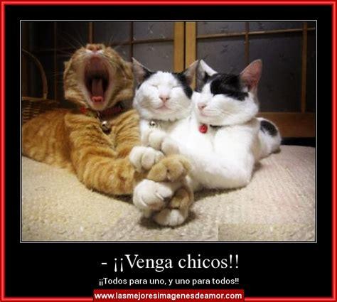 imagenes tiernas gatitos tiernas imagenes para compartir en facebook y whatsapp de