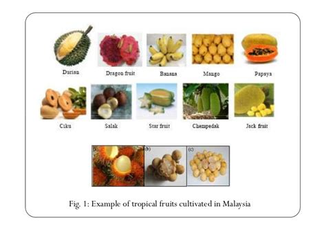 fruit 10 malaysia post harvest handling system of tropical fruits in