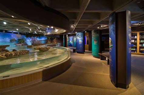 aquarium design inside sharks rays and sketchup at the new england aquarium