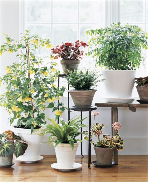 container gardens  bloom real simple