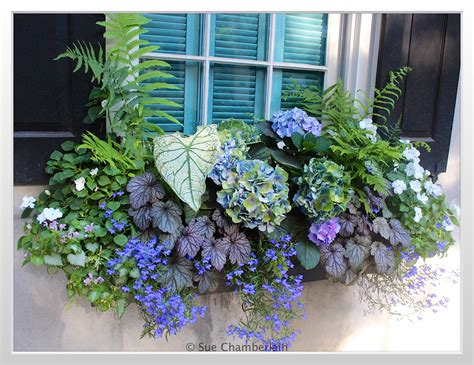 Flowers For Window Boxes Partial Shade - flower box ideas for partial sun www pixshark com images galleries with a bite