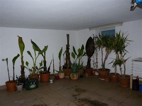 palme wohnzimmer hd wallpapers yucca palme wohnzimmer www love908 cf