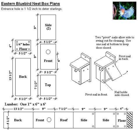 eastern bluebird house plans isabella conservation district environmental education