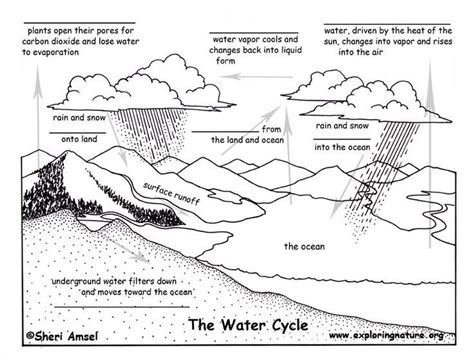 rain cycle coloring page shape cycles in nature worksheet the blank quiz water