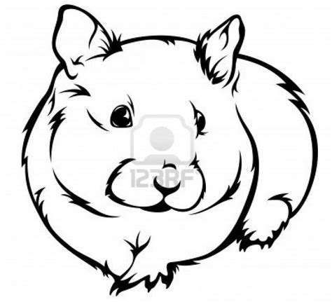 coloring page of hamster hamster pictures to color kids coloring europe travel