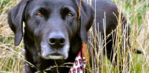 can dogs get fevers can dogs get hay fever or why else might a pete the vet