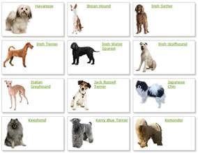 types of dogs all list of different dogs breeds dog breeds list with picture