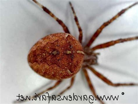 Brown Garden Spider by Brown Garden Spider Photo
