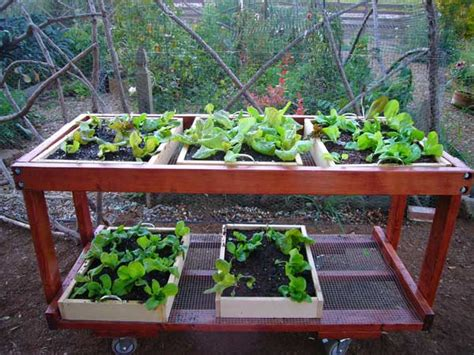table top herb garden growing lettuce how to grow lettuce planting lettuce