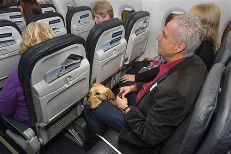 United Airlines Dogs In Cabin by Alaska Airlines Now Allows Service Animals In To