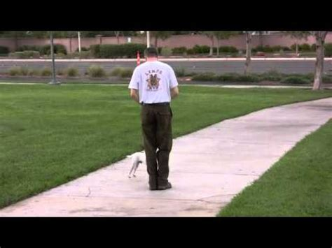 how to a not to pull when walking how to your not to pull leash walking