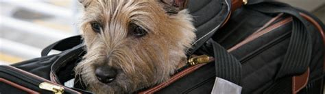 United Airlines In Cabin Pet Policy by Southwest Airlines Pet Policy Tripswithpets