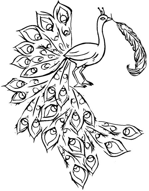 free coloring pages of easy peacock