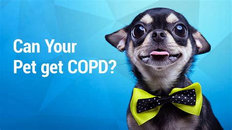 copd in dogs lung institute can your pet get copd