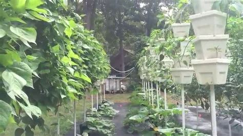 Build Vertical Hydroponic Garden Diy Vertical Hydroponic Garden Tour