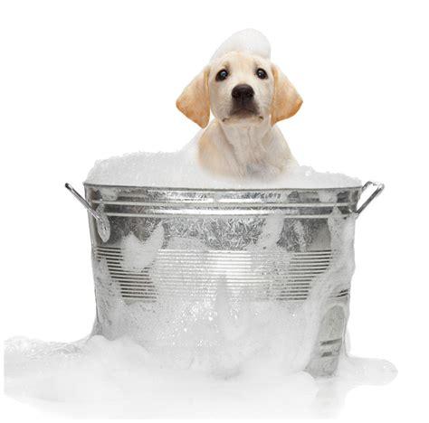 dogs bathtub jennifer elise june 2010