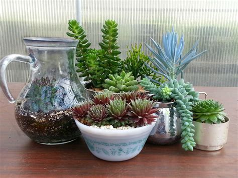 succulent plant how to identify your succulent plant world of succulents