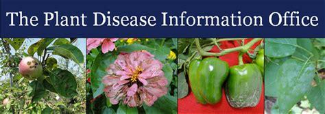 plant disease report caes pdio home