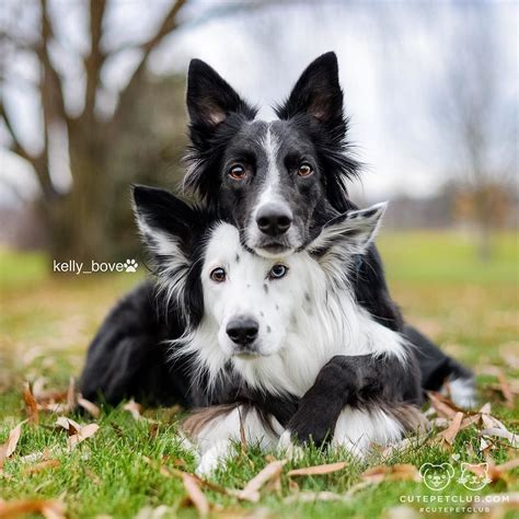 Zain Pet from kelly bove quot envy and zain are two adorable rescue border collies that take quot aww quot to the