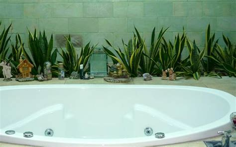 Decoration Ideas For Bathrooms 12 creative ways to use plants in the bathroom