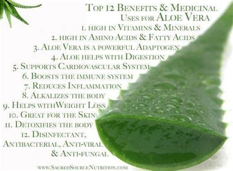 Aloe Vera Detox Benefits by Here Are A Few Health Benefits Of Aloe Vera Gel And Juice