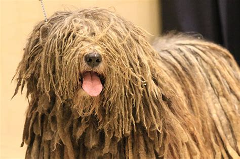 what channel is the westminster show on where to the 2016 westminster show