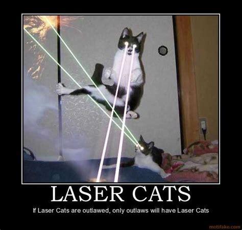 Laser Cat Meme - cybergata laser cats