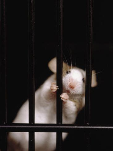 clever creative   natural mouse repellent ideas