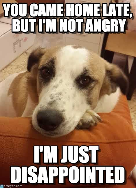 Disappointed Dog Meme - disappointeddog disappointed dog meme on memegen