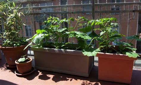 vasi per orto sul terrazzo orto sul terrazzo idee green