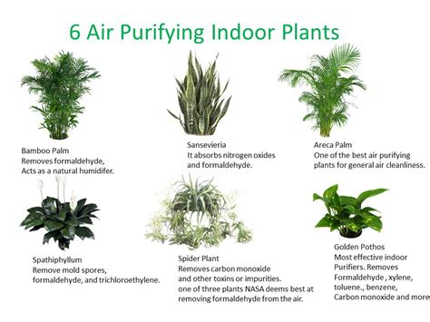 good plants for indoors top 30 plants to detox your home elephant journal
