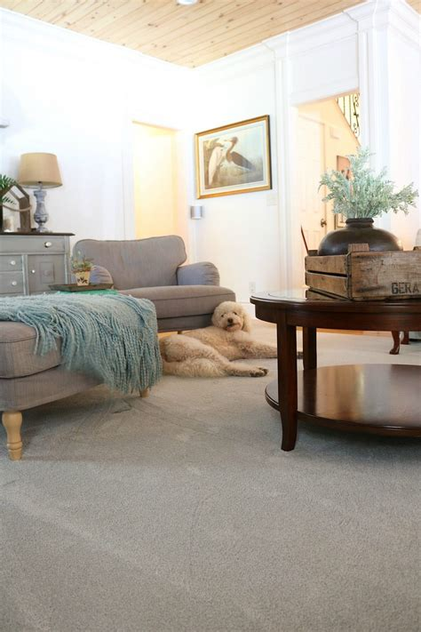 are dogs allowed at home depot pet friendly carpet makes easier refresh restyle