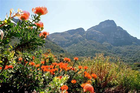 Kirstenbosch Botanical Gardens South Africa Attractions And Landmarks Wondermondo