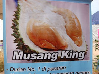 malaysia  durian musang king raja kunyit mas