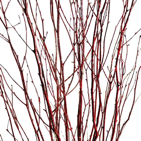 decorative branches red birch branches