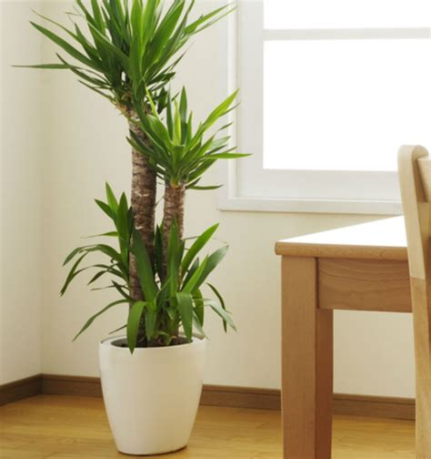 indoor plan indoor plants blooms productivity in business homes
