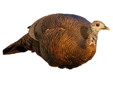 ebay turkey ebay turkey decoy myideasbedroom com