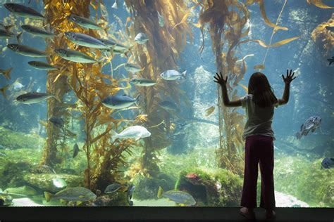 aquarium design ireland family activities in galway the connacht hotel galway