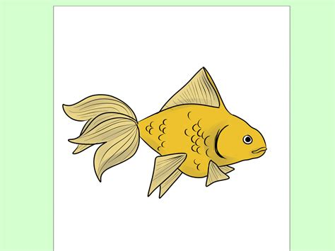 doodle drawer how to draw goldfish 9 steps with pictures wikihow