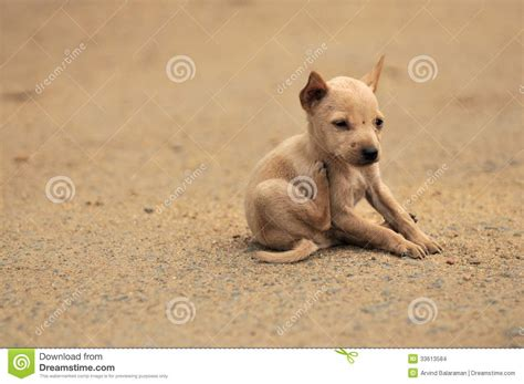 stray puppy stray stock images image 33613584