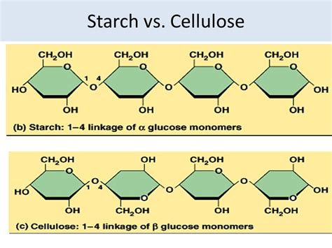 carbohydrates vs starch aim how can we describe the structure of carbohydrates
