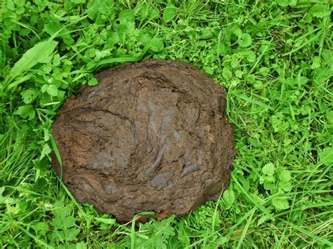 cow poop house india travellerspoint travel photography now buy cow dung cakes online oneindia news