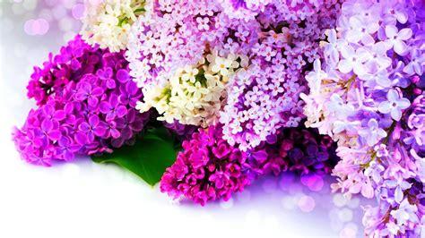 rosa blühende bäume 1716 die 97 besten fr 252 hling sch 246 ne hintergrundbilder f 252 r desktop