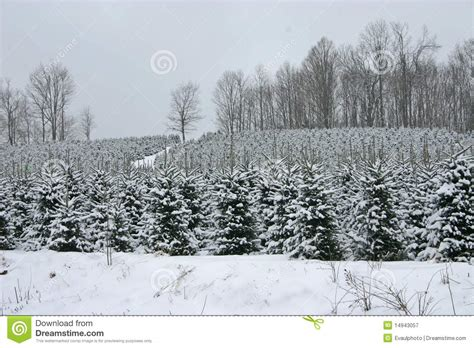 christmas tree whiteout royalty free stock photography
