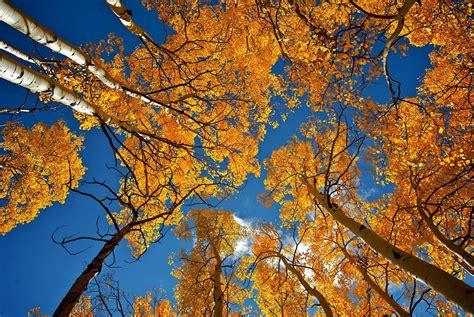 how to fall in dicas para fotografar o outono da melhor maneira blog emania