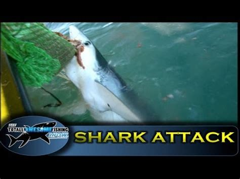 fishing boat attacked by shark megalodon shark attacks girls fishing line how to save money and
