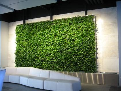 interior plant wall the ultimate guide to living green walls ambius
